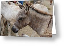 Sad Wild Donkey Greeting Card