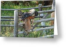 Saddle Greeting Card