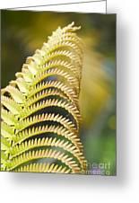 Sadleria Cyatheoides Amau Fern Maui Hawaii Greeting Card