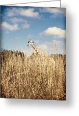 Safari Giraffe  Greeting Card