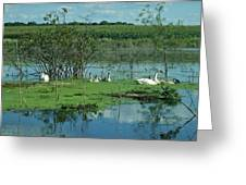 Safe In The Pond Greeting Card