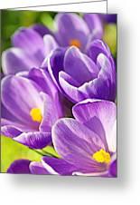 Saffron Flowers. Greeting Card