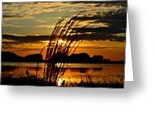Sage Grass Sunset Greeting Card