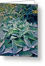 Sage In The Garden Greeting Card