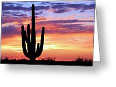 Saguaro At Sunset Greeting Card
