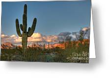 Saguaro At Sunset Greeting Card