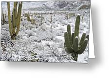 Saguaro Cacti After Rare Desert Greeting Card