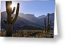 Saguaro Cacti And Catalina Mountains Greeting Card