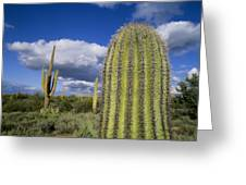 Saguaro Cactus Arizona Greeting Card