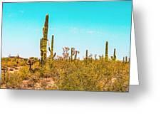 Saguaro Cactus In Organ Pipe Monument Greeting Card