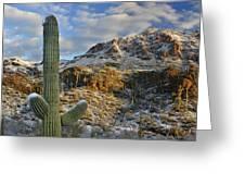 Saguaro National Park Winter Morning Greeting Card