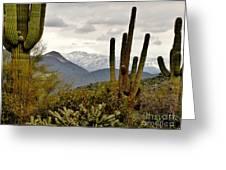 Saguaro Sentinels Greeting Card