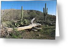 Saguaro Skeleton Saguaro National Park Az  Greeting Card