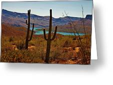 Saguaros In Arizona Greeting Card