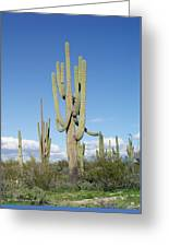 Saguaros With Green Grass Greeting Card