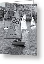 Sailboats On The Charles River II Greeting Card by Clarence Holmes