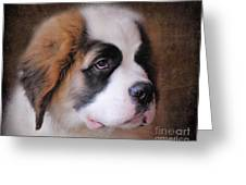Saint Bernard Puppy Greeting Card by Jai Johnson