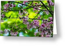 Sakura Tree In Bloom - Featured 3 Greeting Card