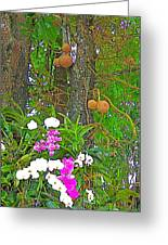 Sala Tree And Orchids At Buddhist University In Chiang Mai-thail Greeting Card