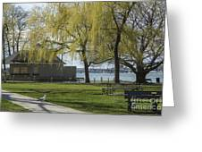 Salem Willow Trees Greeting Card