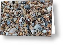 Sallie's Sea Shells Greeting Card