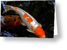Salmon And White Koi Greeting Card