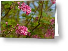 Salmon Berry Flowers Greeting Card