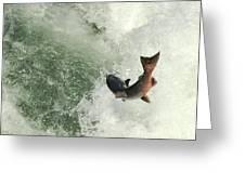 Salmon Run 2 Greeting Card by Mamie Gunning
