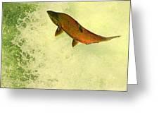 Salmon Run 3 Greeting Card by Mamie Gunning