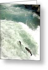 Salmon Run 4 Greeting Card by Mamie Gunning