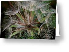 Salsify Seeds - 1 Greeting Card