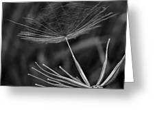 Salsify - Wildflower - Seed Greeting Card