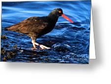 Salt Creek Catcher Greeting Card
