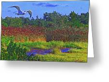 Salt Marsh Gull Greeting Card