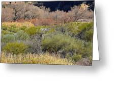 Salt River Spring Greeting Card