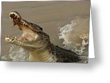 Salt Water Crocodile 2 Greeting Card