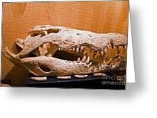Salt Water Crocodile Skull Greeting Card