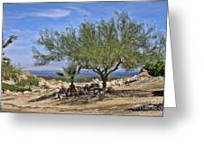 Salton Sea Oasis Greeting Card