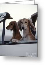 Saluki Dogs In Car Greeting Card