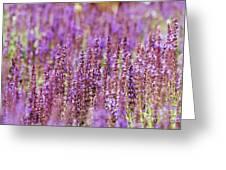 Salvia Abstract Greeting Card