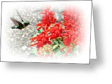 Salvia Approach Greeting Card