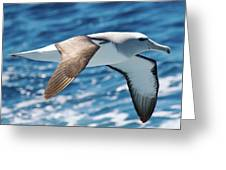 Salvins Albatross Greeting Card