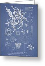 Salwater Algae Greeting Card