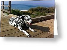 Samdog At The Beach Greeting Card