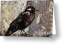 Same Crow Different Day Greeting Card