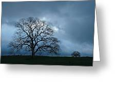 Same Tree Many Skies 14 Greeting Card