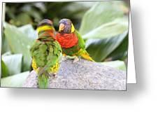 San Diego Zoo - 1212341 Greeting Card
