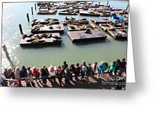 San Francisco Pier 39 Sea Lions 5d26111 Greeting Card by Wingsdomain Art and Photography