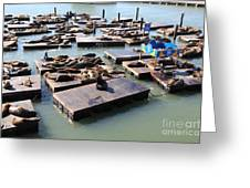 San Francisco Pier 39 Sea Lions 5d26115 Greeting Card by Wingsdomain Art and Photography