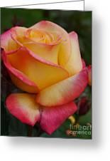 San Francisco Rose Garden Rose Greeting Card